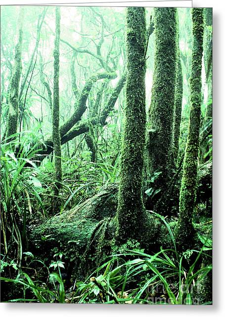 El Yunque National Forest Greeting Card by Thomas R Fletcher