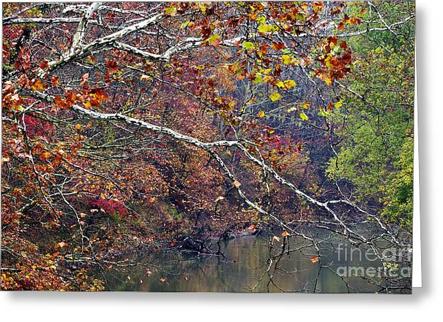 Fall along West Fork River Greeting Card by Thomas R Fletcher