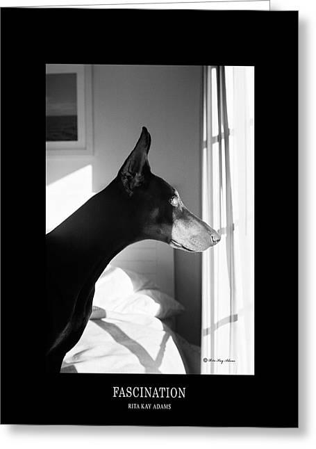 Dobermann Greeting Cards - Fascination  Greeting Card by Rita Kay Adams