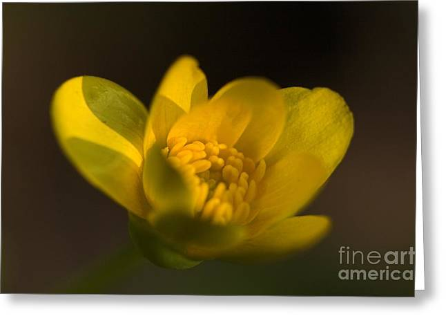 Sweating Greeting Cards - Flower Greeting Card by Odon Czintos