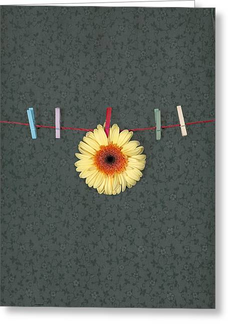Peg Greeting Cards - Gerbera Greeting Card by Joana Kruse