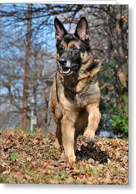 Guard Dog Photographs Greeting Cards - German Shepherd Greeting Card by Jai Johnson