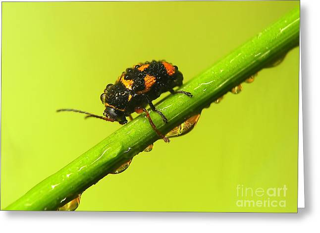 Paint Photograph Greeting Cards - Insect Greeting Card by Odon Czintos
