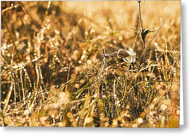 Styria Greeting Cards - Meadow flowers Greeting Card by Odon Czintos