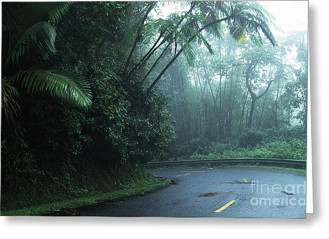 Puerto Rico Greeting Cards - Misty Rainforest El Yunque Greeting Card by Thomas R Fletcher
