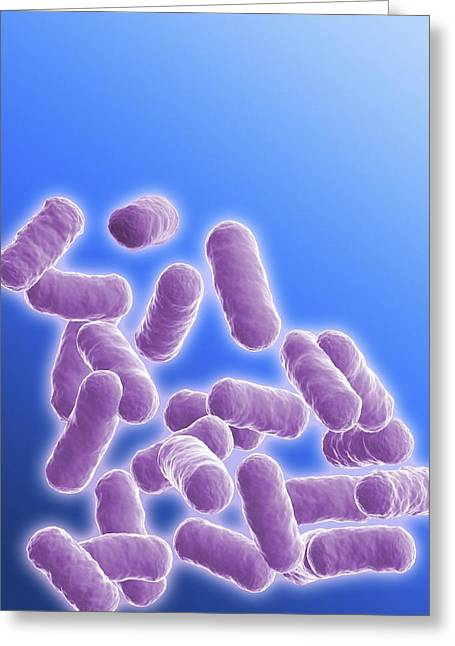 Rod-shaped Greeting Cards - Rod Shaped Bacillus Bacteria Greeting Card by Pasieka