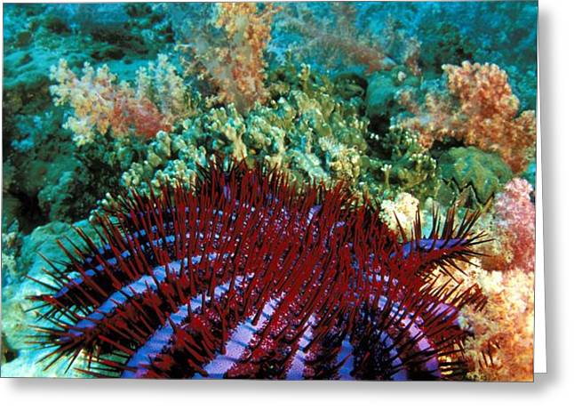 Thailand, Marine Life Greeting Card by Dave Fleetham - Printscapes
