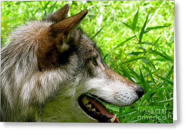 Did You See That Greeting Cards - The Wild Wolve Group A Greeting Card by Debra     Vatalaro