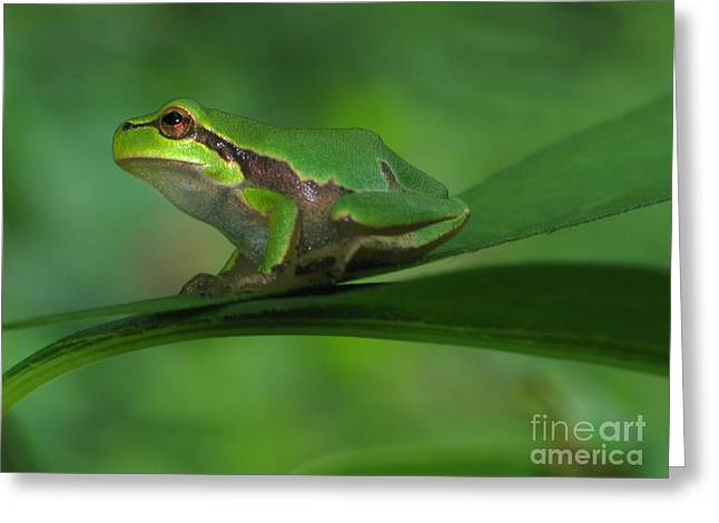 Moon Beach Greeting Cards - Tree frog Greeting Card by Odon Czintos