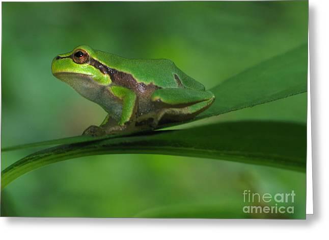 Tree frog Greeting Card by Odon Czintos