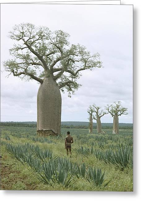 Baobab Greeting Cards - Untitled Greeting Card by Luis Marden