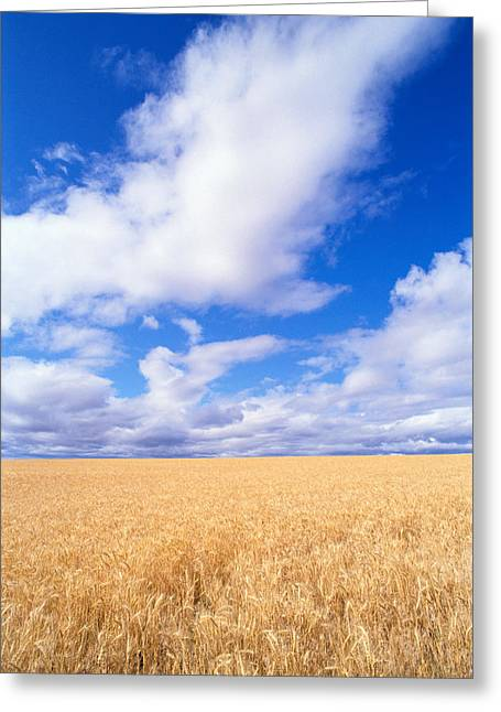 Overcast Day Greeting Cards - View Of Oregon Greeting Card by Greg Vaughn - Printscapes