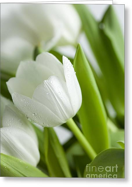 Drop Greeting Cards - White Tulips Greeting Card by Nailia Schwarz