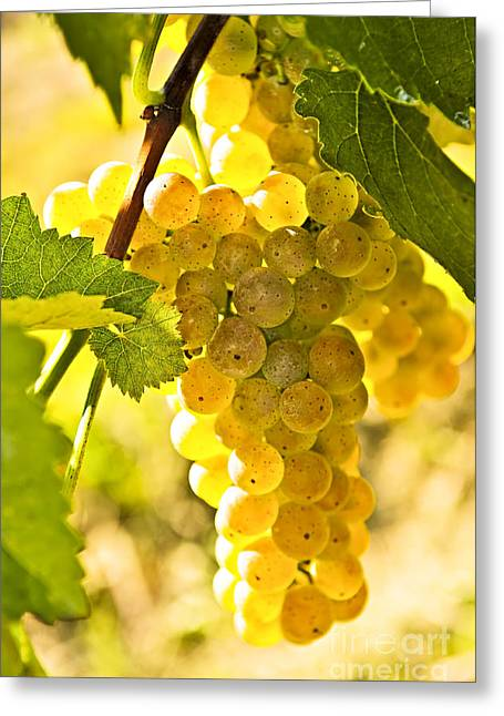 Row Greeting Cards - Yellow grapes Greeting Card by Elena Elisseeva