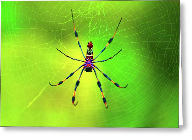 Insects Digital Art Greeting Cards - 42- Come Closer Greeting Card by Joseph Keane