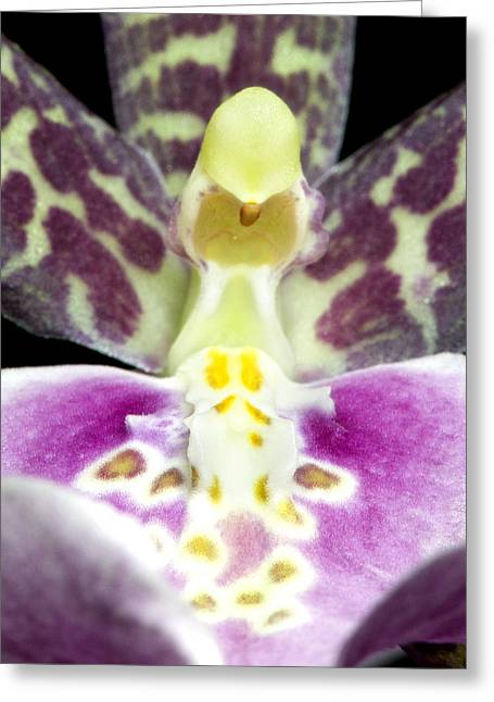 Glowing Greeting Cards - Exotic Orchids of C Ribet Greeting Card by C Ribet