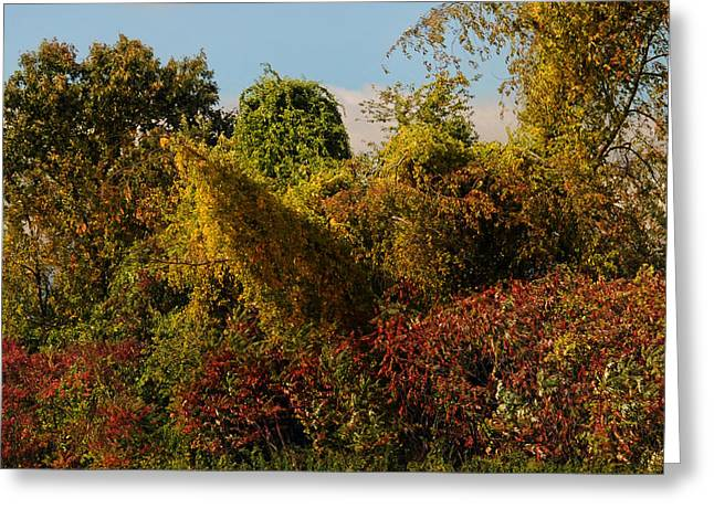 Overgrown Greeting Cards - Autumn Series Greeting Card by HD Connelly