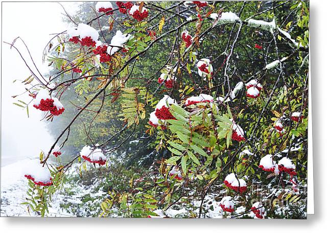 West Virginia Highlands Greeting Cards - Fall color and Snow along the Highland Scenic Highway Greeting Card by Thomas R Fletcher