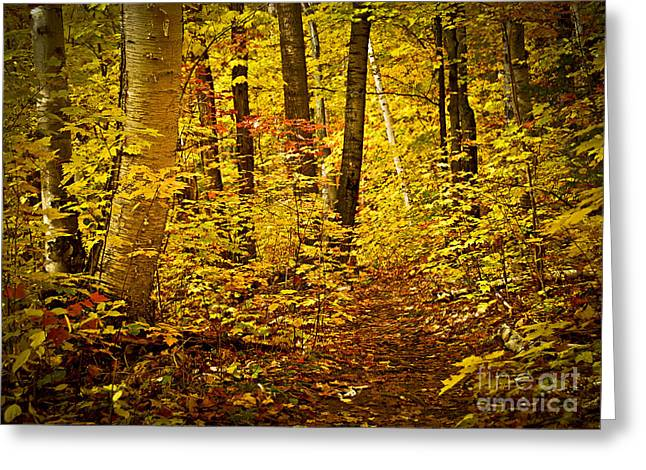 Turning Leaves Photographs Greeting Cards - Fall forest Greeting Card by Elena Elisseeva