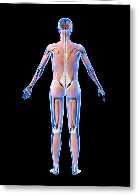 Conscious Greeting Cards - Female Muscles, Artwork Greeting Card by Roger Harris