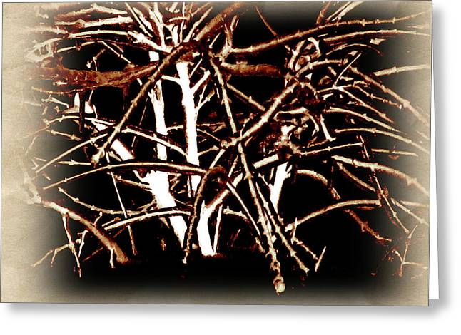 Photos Of Autumn Mixed Media Greeting Cards - Grounded In Earth  - Series 1 Greeting Card by Debra     Vatalaro