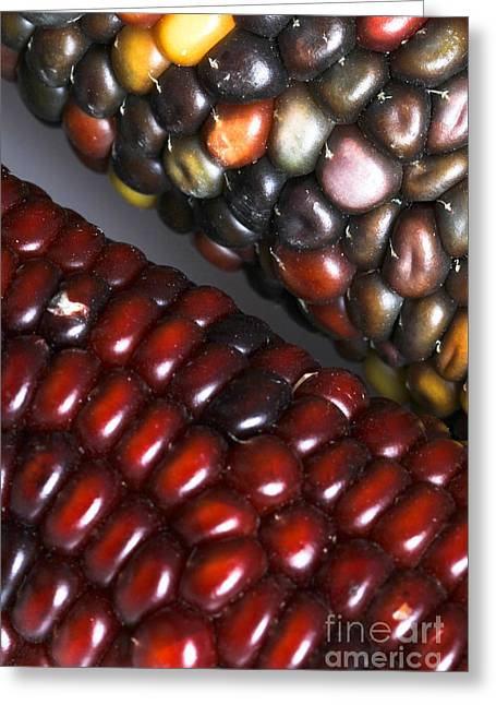 Corn Kernel Greeting Cards - Indian Corn Greeting Card by Photo Researchers, Inc.