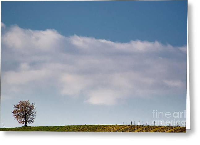 Lonely tree Greeting Card by Mats Silvan