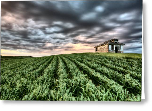 Beautiful Scenery Greeting Cards - Newly planted crop Greeting Card by Mark Duffy
