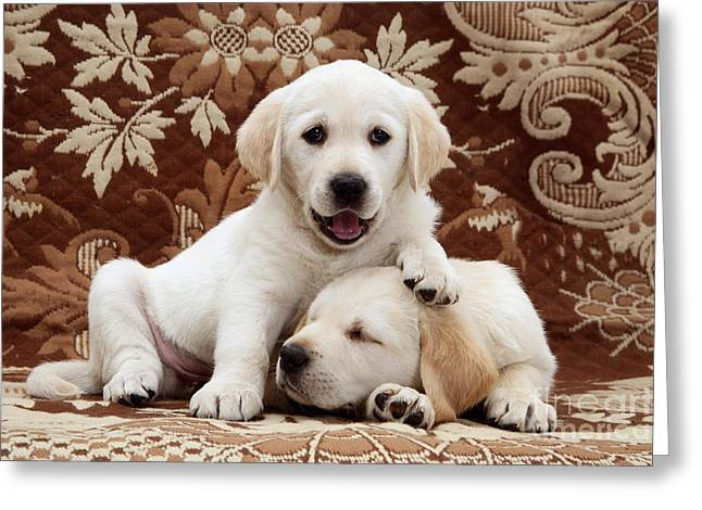 Golden Puppy Greeting Cards - Puppies Greeting Card by Jane Burton