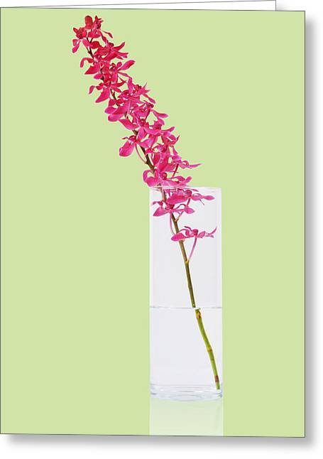 Glass Vase Greeting Cards - Red Orchid Bunch Greeting Card by Atiketta Sangasaeng