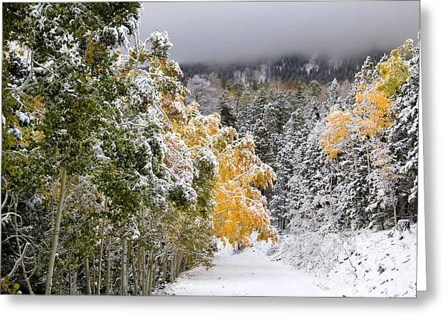 November Framed Prints Greeting Cards - Rocky Mountain Fall Greeting Card by Southern Utah  Photography