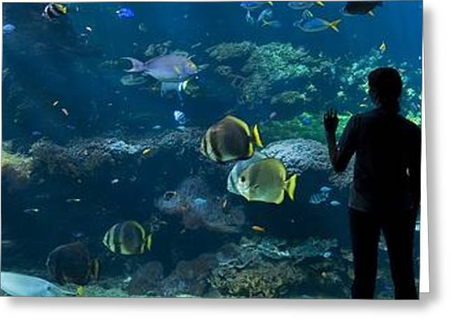 Biology Greeting Cards - Sea-life Centre, France Greeting Card by Alexis Rosenfeld