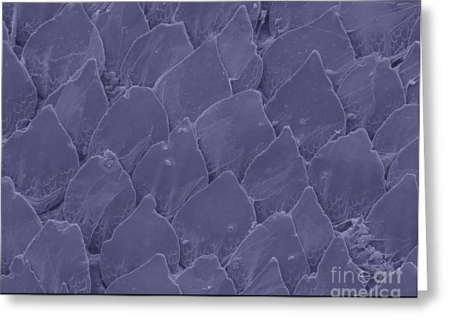 Sem Greeting Cards - Shark Skin, Sem Greeting Card by Ted Kinsman
