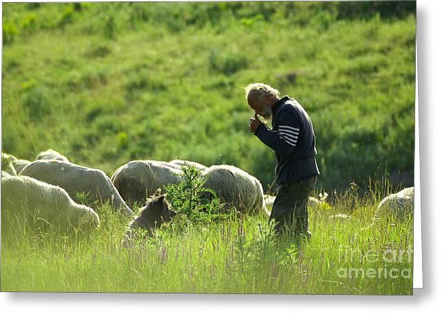 Sweating Greeting Cards - Shepherd Greeting Card by Odon Czintos