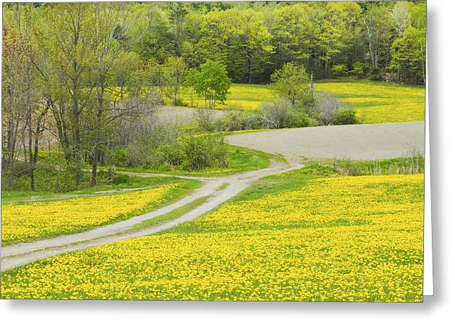 Rural Maine Roads Photographs Greeting Cards - Spring Farm Landscape With Dandelion bloom in Maine Greeting Card by Keith Webber Jr