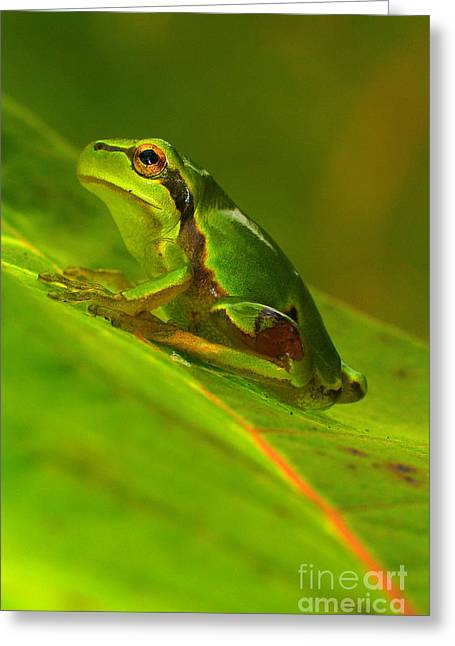 Frogs Greeting Cards - Tree frog Greeting Card by Odon Czintos
