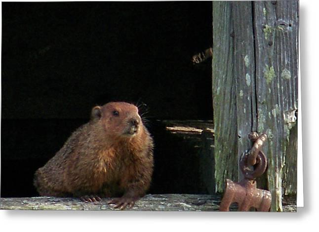 Groundhog Digital Art Greeting Cards - 5003-Groundhog Greeting Card by Martha Abell