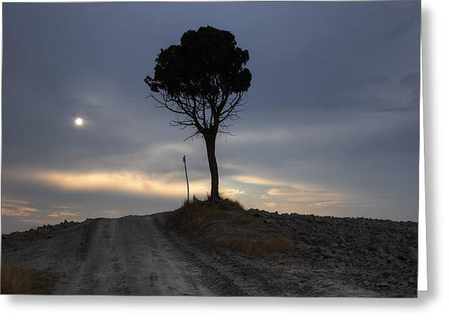 Pines Greeting Cards - Tuscany Greeting Card by Joana Kruse