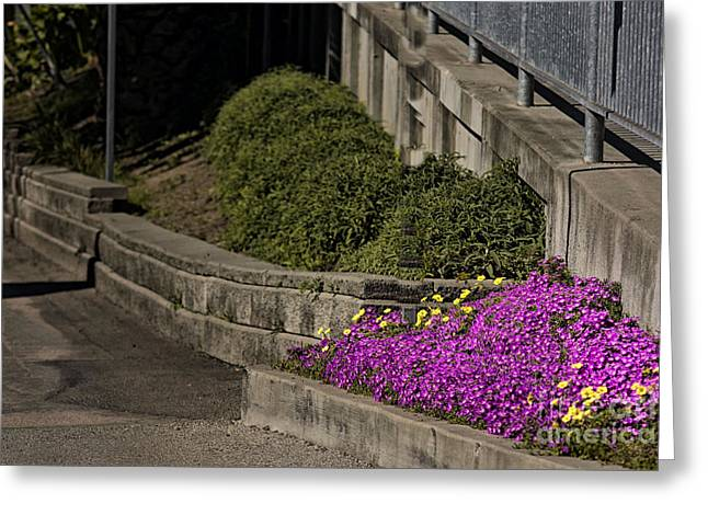 Concrete Planter Greeting Cards - 524 pr Three Bushes Greeting Card by Chris Berry