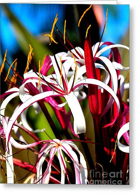 Ocean Photography Greeting Cards - Flowers of the Forest Series  Greeting Card by Terry Troupe