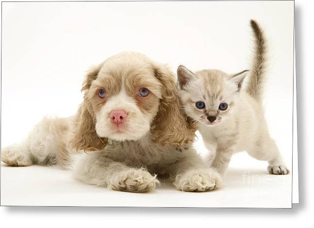 Blank And White Greeting Cards - Kitten And Pup Greeting Card by Jane Burton