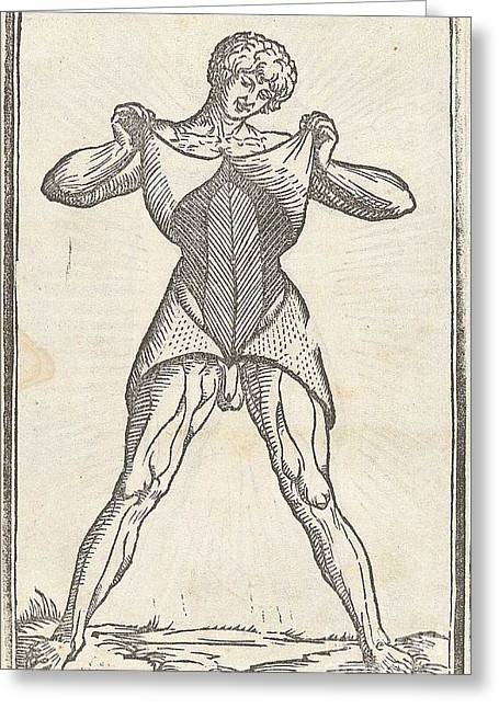 Historical Images Greeting Cards - Historical Anatomical Illustration Greeting Card by Science Source