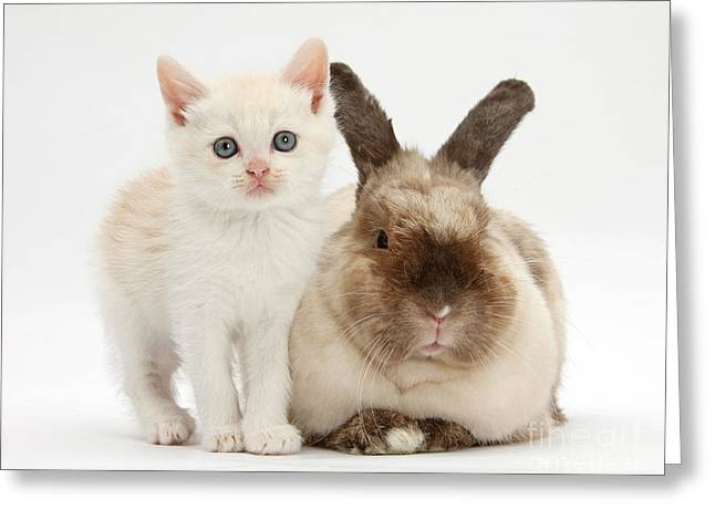 Colorpoint Greeting Cards - Kitten And Rabbit Greeting Card by Mark Taylor