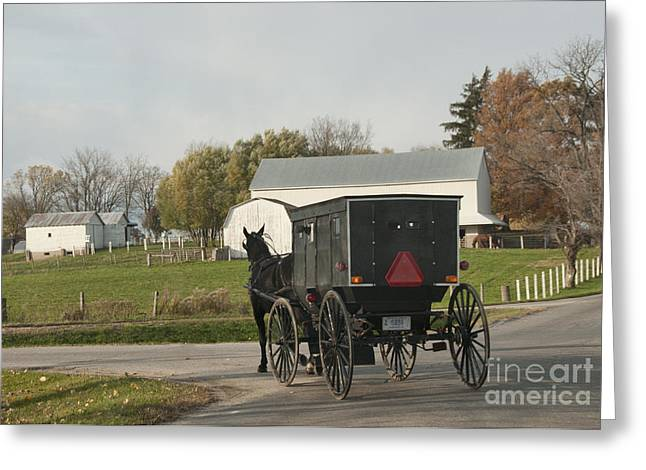 Horse And Buggy Greeting Cards - Amish Buggy Greeting Card by David Arment