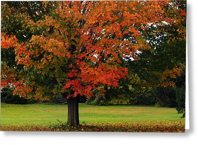 Fall Grass Greeting Cards - Autumn Series Greeting Card by HD Connelly