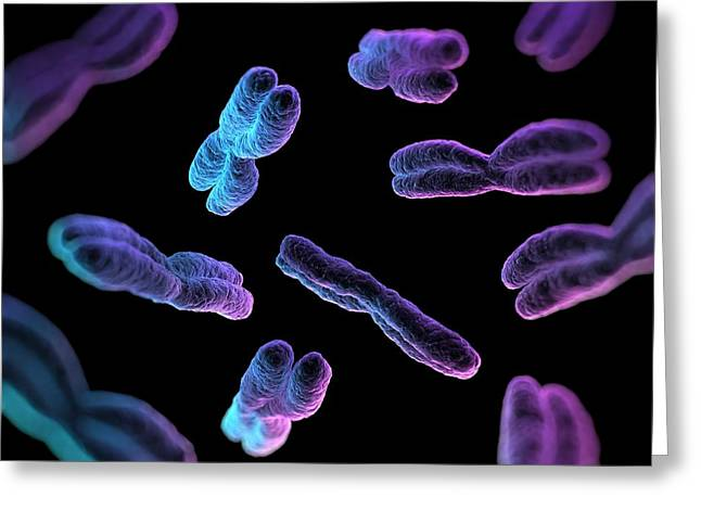 Nucleoprotein Greeting Cards - Chromosomes, Artwork Greeting Card by Sciepro