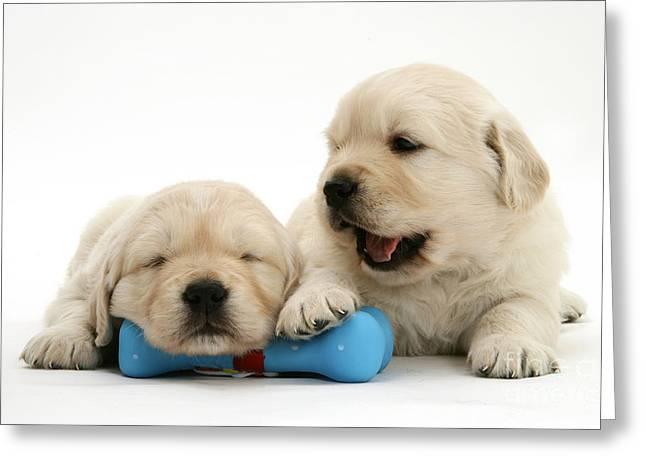 Sleeping Baby Animal Greeting Cards - Golden Retriever Puppies Greeting Card by Jane Burton