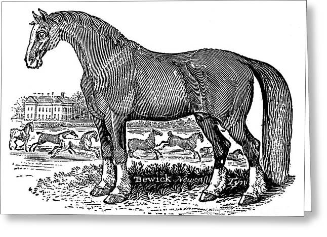 Bewick Greeting Cards - Horse Greeting Card by Granger