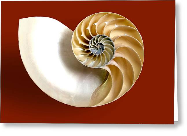 Patterns In Nature Greeting Cards - Logarithmic Spiral Greeting Card by Photo Researchers, Inc.