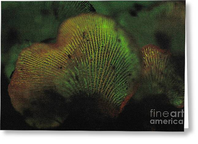 Luminescent Greeting Cards - Luminescent Mushroom Panellus Stipticus Greeting Card by Ted Kinsman